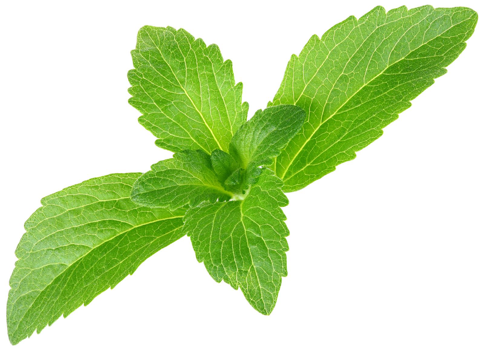 Gaseosas del mundo se rinden a la stevia, la hierba dulce de Paraguay