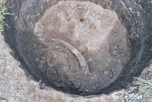 Encuentran restos de mastodonte en jardín en Argentina