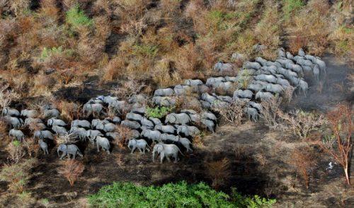 Más riesgo de extinción para los animales más grandes y los más pequeños