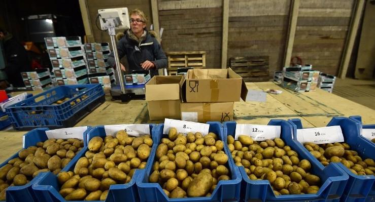 El cultivo de patatas con agua salada, una apuesta contra el hambre