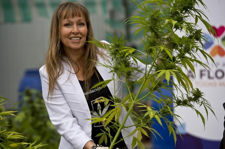 La presidenta de la Fundación Daya, Ana Maria Gazmuri, muestra una de las plantas de marihuana en un laboratorio en Chile, abril 7, 2015. AFP PHOTO / MARTIN BERNETTI