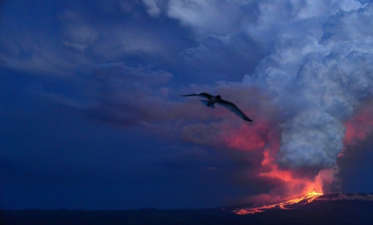 Violenta erupción volcánica en Galápagos no afectaría a las Iguanas rosadas