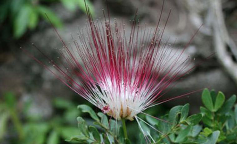 Descubren en Colombia nueva especie de Flora