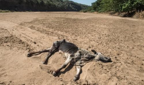 """Impacto del cambio climático en los animales está """"subestimado"""""""