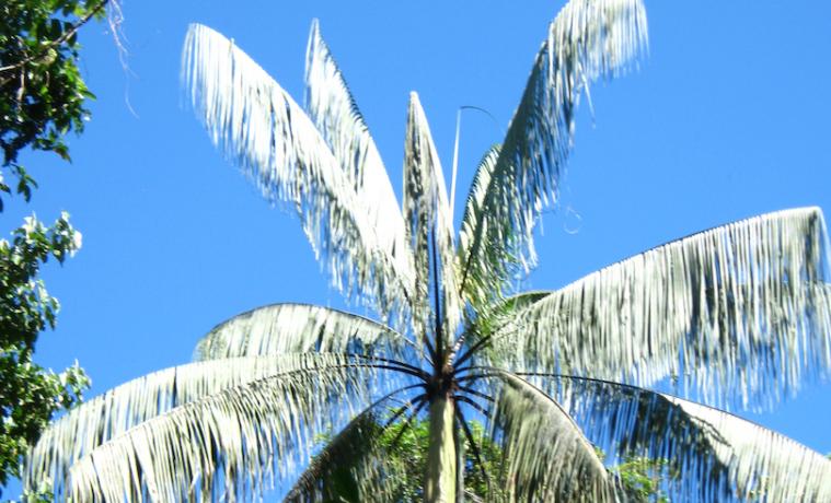 Comunidades amazónicas comprometidas con el crecimiento verde