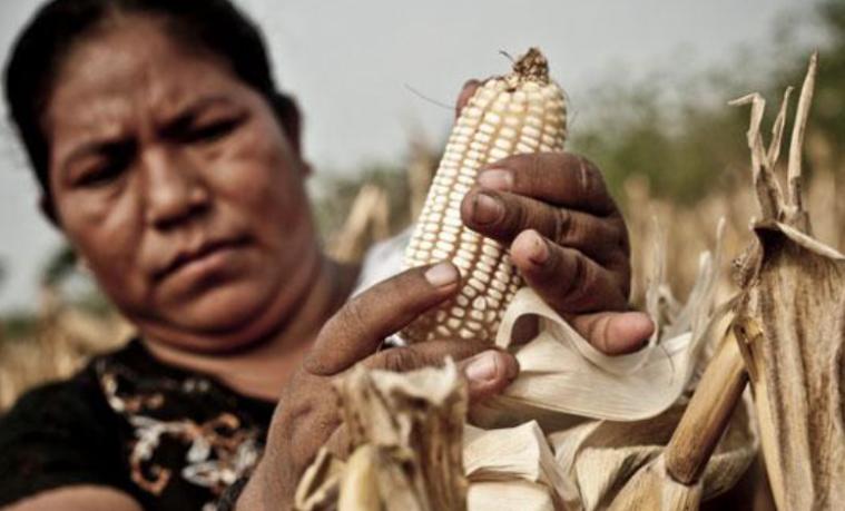 Mujeres rurales de América Latina
