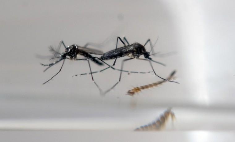 El cambio climático favorece la diseminación del zika y otros virus