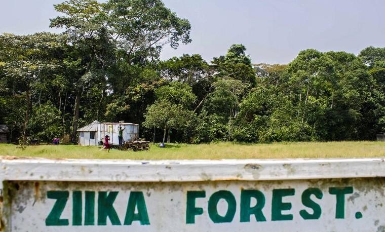 La súbita notoriedad de la selva ugandesa donde se identificó el Zika