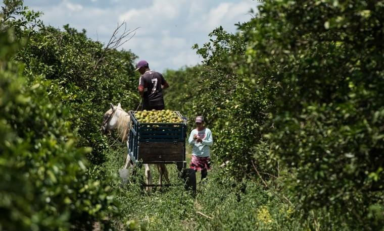 La agricultura busca ser una solución al cambio climático