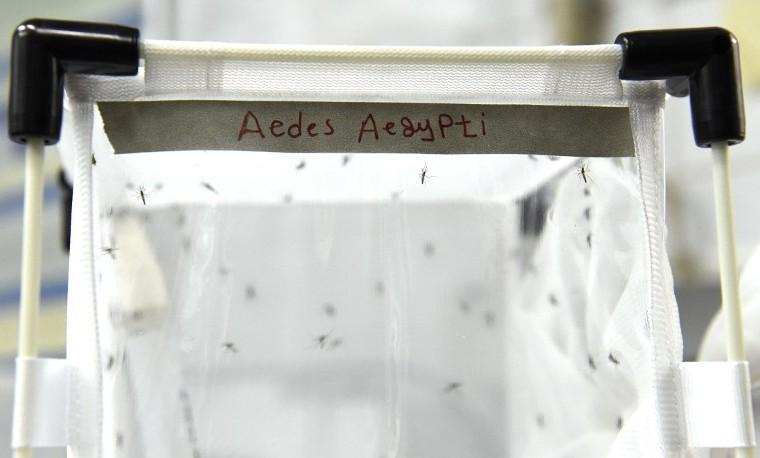 Científicos esterilizan con radiación a mosquitos machos para erradicar el zika