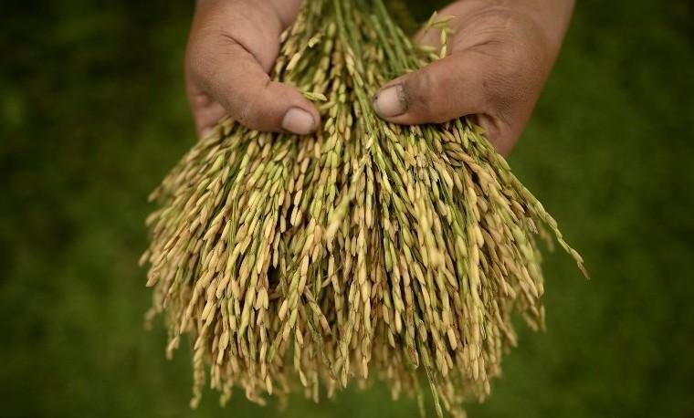 Fin de altos precios agrícolas?