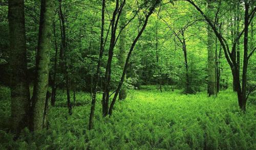 Bosques: más cerca de lo que imaginamos