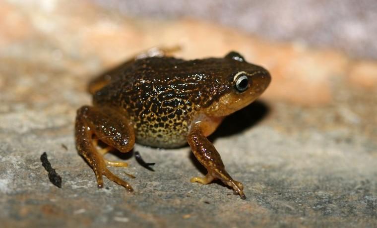 Fin del conflicto en Colombia, oportunidad científica para descubrir especies