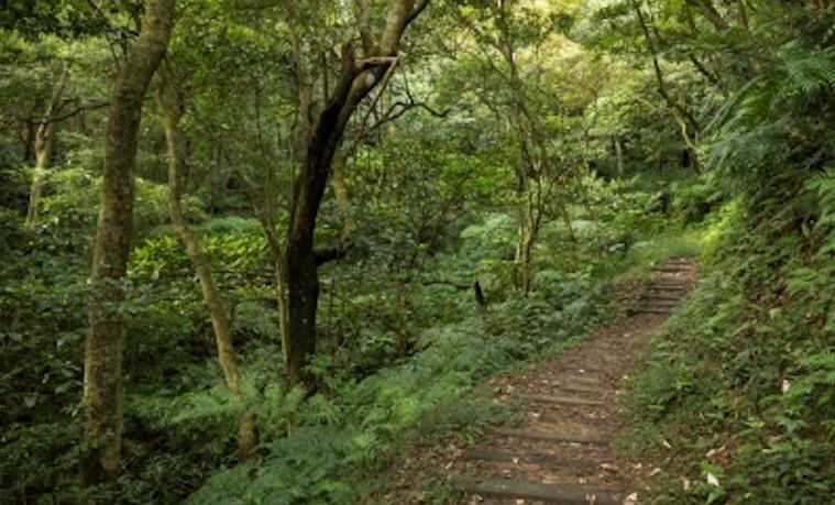 gestión de bosques paisajes forestales