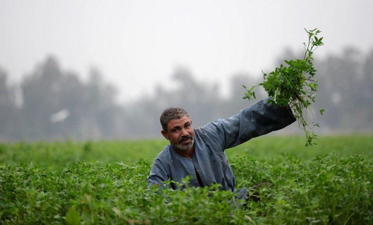 Agro Producción agricola recursos naturales