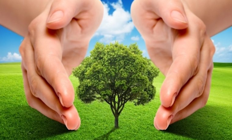 ¿Luchar contra el cambio climático financiando la forestación en África?