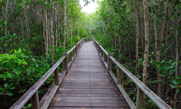 Ciencias forestales y los retos del manejo forestal sostenible