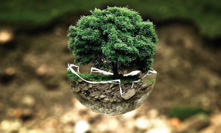 Cinco modelos de éxito para tu empresa 'verde'
