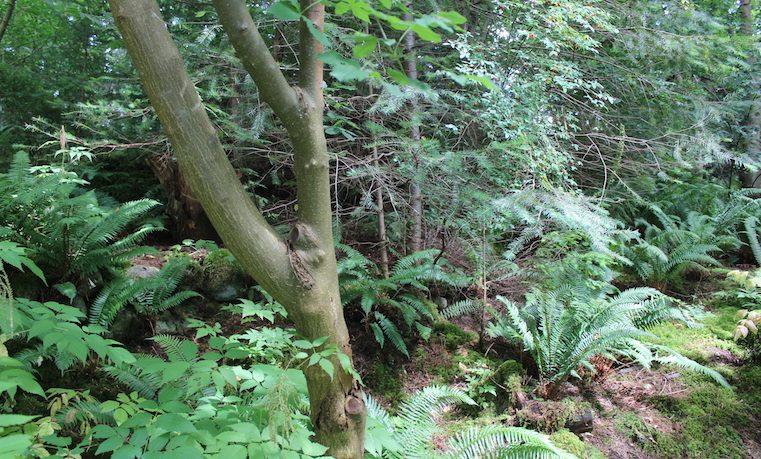 FAO insta a invertir en bosques urbanos contra la contaminación