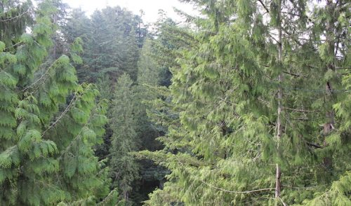 Fortalecimiento de capacidades forestales desde el enfoque del pensamiento complejo