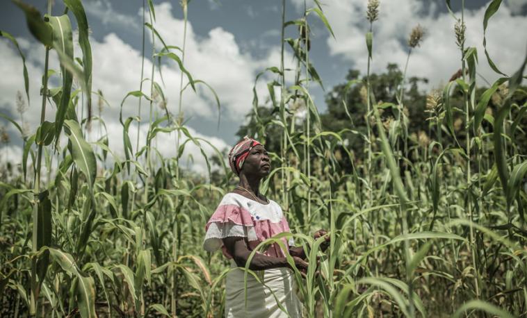 Cinco cosas que debes saber sobre el cambio climático y el hambre