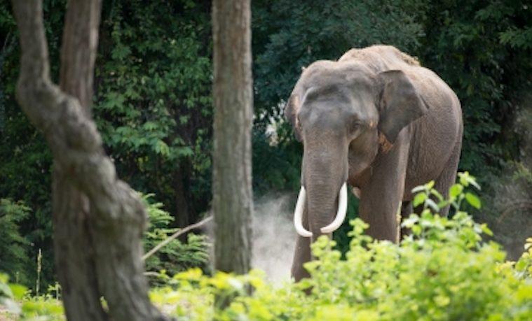 El mundo empieza a tomarse en serio la masacre de elefantes
