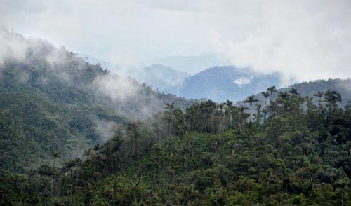 Cómo fortalecer la apropiación de la Amazonía en el Posconflicto