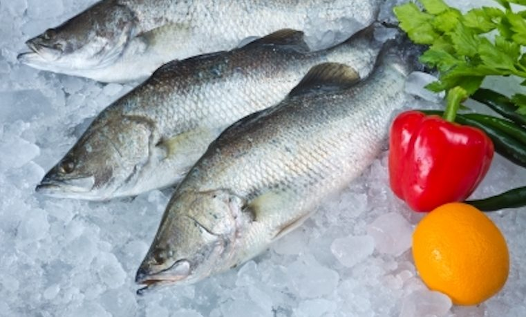 Globalización del pescado: el océano se vacía y el acuario se llena