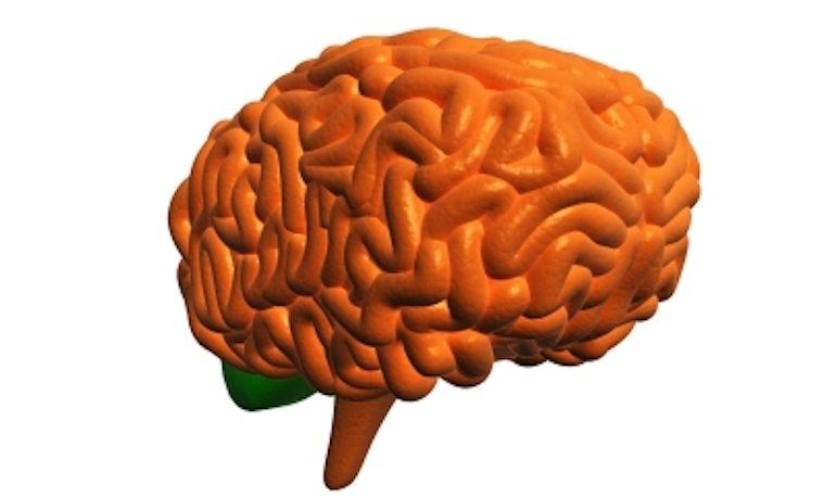 Nuevas tecnologías de la imagen podrían revelar las profundidades del cerebro