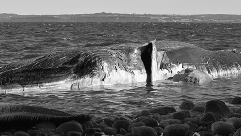 ballenas cambio climático