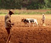 ¿Por qué la inclusión social es buena para los agronegocios?
