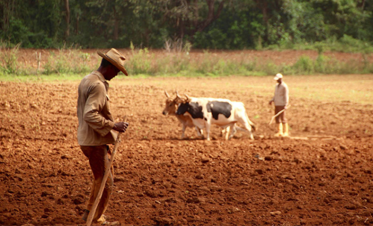 agronegocios inclusión social