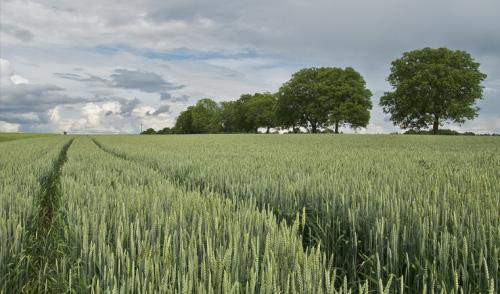 La agricultura biológica, la difícil reforma en la UE