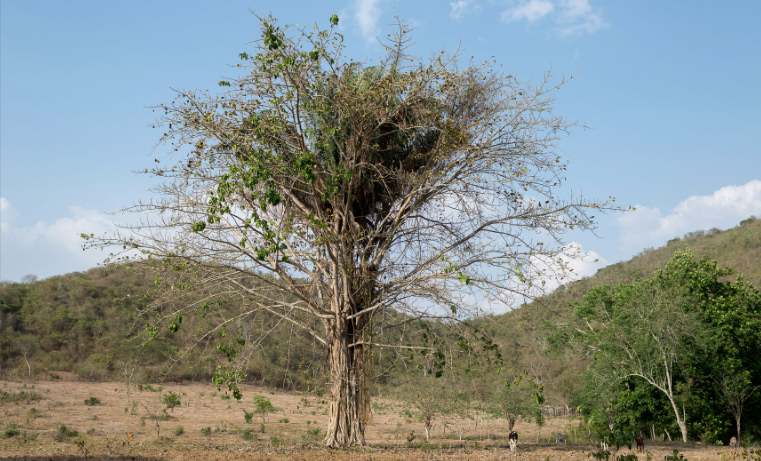 Estas serían las especies de flora y fauna colombianas amenazadas por deforestación