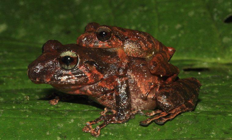 Descubren 47 nuevas especies en la Amazonia colombiana