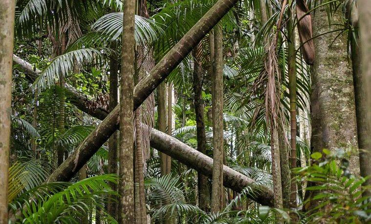 """Hijos de la """"fiebre del caucho"""" ante el desafío de conservar el Amazonas brasileño"""