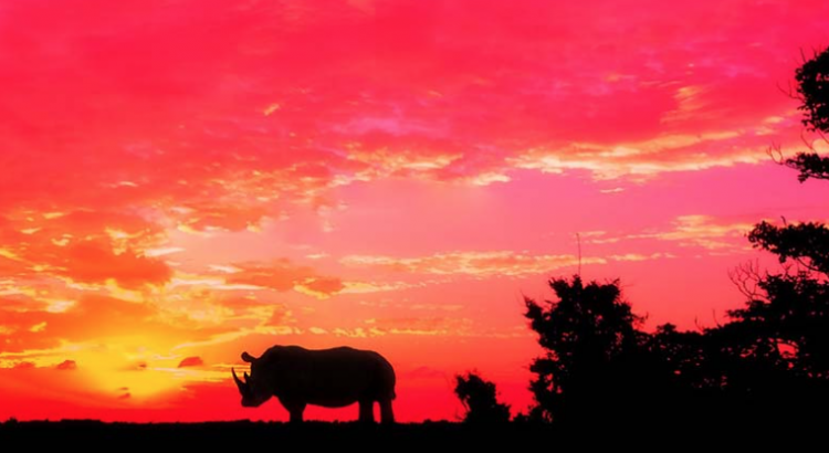 Por qué la aplicación de la ley es esencial para detener el comercio ilegal de especies silvestres