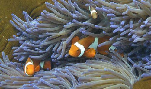 """Científicos descubren el """"corazón"""" resistente de la Gran Barrera de Coral"""