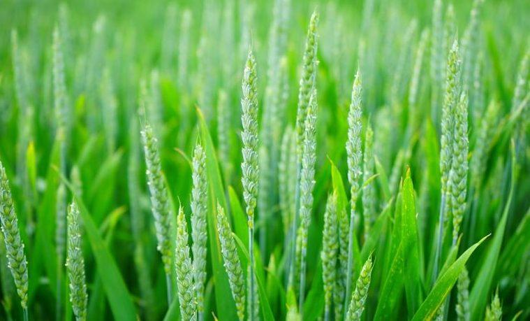 Inversión en la agricultura: Gran impacto en la vida de las mujeres y las niñas