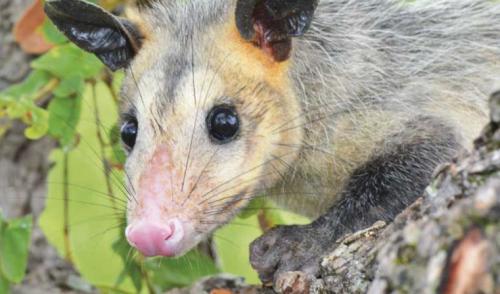 Primera gran evaluación de biodiversidad en el río de la vida de Colombia