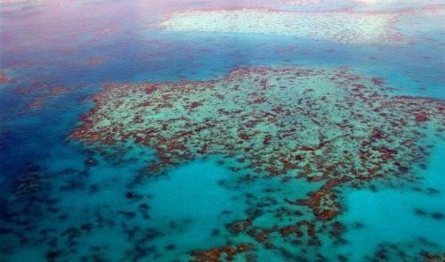Los arrecifes de moluscos australianos, un desastre ecológico desconocido
