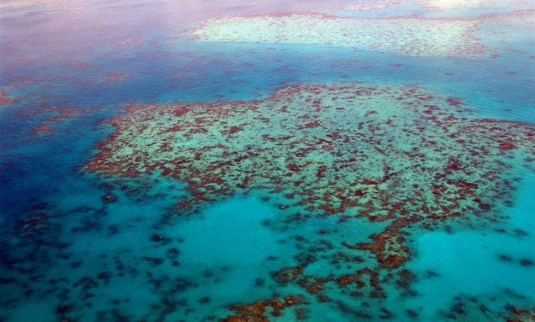moluscos Australia corales