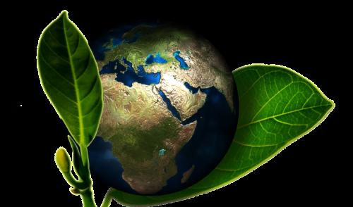 Obligación de los estados de proteger ambiente