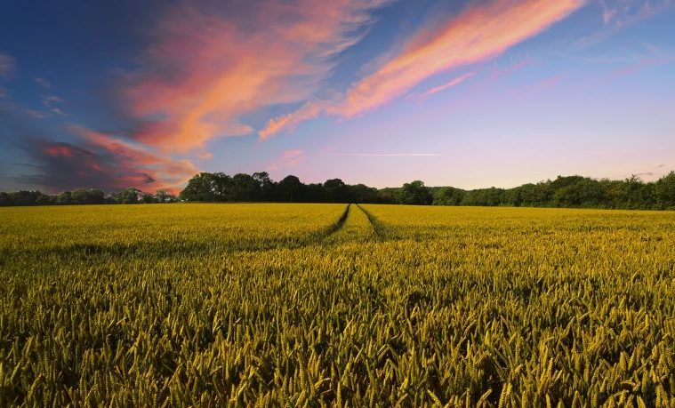 resiliencia agricultura clima agro