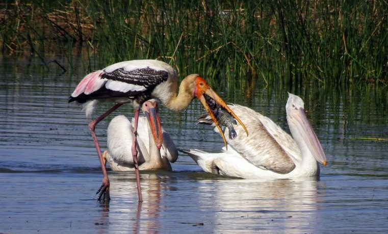 biodiversidad humanidad animales