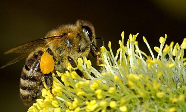 Las abejas ayudan a medir la contaminación del aire en Roma