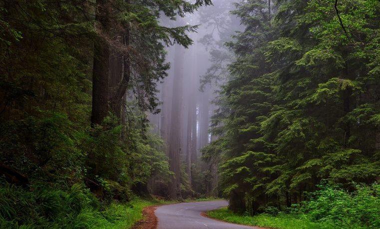 América Latina es una de las tres regiones del mundo donde sigue la deforestación