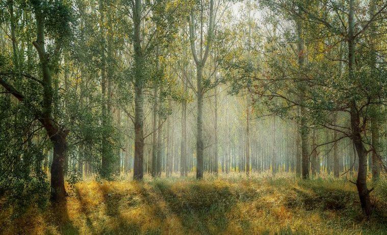Aproximaciones a la justicia forestal