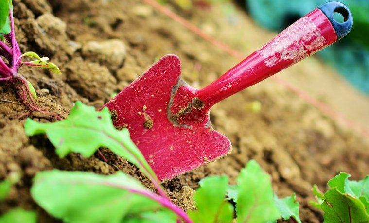 Colombia necesita un jardinero