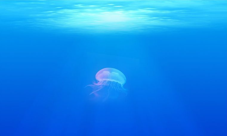 océanos vida marina